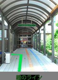 緑のライン